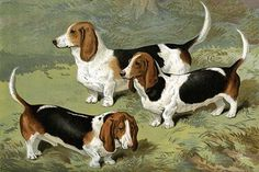 Basset Hounds. High quality vintage art reproduction by Buyenlarge. One of many rare and wonderful images brought forward in time. I hope they bring you pleasure each and every time you look at them.
