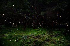 Лесные пейзажи Великобритании Элли Дэвис