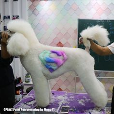 less is more,fantasy creative grooming work done by opawz Paint Pen,sharing by Meng Yi pet grooming school.