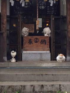 北冬書房などで執筆活動を行う漫画家・川勝徳重さんが、自身のTwitter上に投稿した「境内で雨宿りをする猫」の画像が「神々しい」と話題だ。 線路...