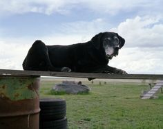 Merlyn from Otis, CO.  I love his name, it suits him! Photo Series Captures The Quiet Dignity Of Search And Rescue Dogs That Served During 9/11