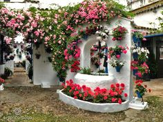 Patio Trueque 4, Córdoba, Spain