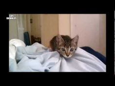 Top 10 : Cats Can Be Jerks - Top 10 : Les Chats Peuvent Etre Pervers