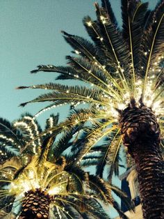 palm trees and twinkle lights. put 'em together and they make quite a lovely sight.