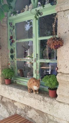 Alaçatı kedisi Kittens Cutest, Cats And Kittens, Cute Cats, Orange And White Cat, Clumping Cat Litter, Cat Hacks, Kitten Love, Cat Photography, Ginger Cats