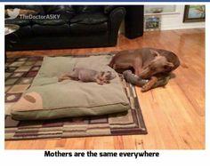 <3 moms & pups