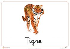 Fichas de Animales Salvajes: Tigre Disney Characters, Fictional Characters, Africa, Animals, Montessori, Homeschooling, Pink, Jungle Animals, Child Psychotherapy