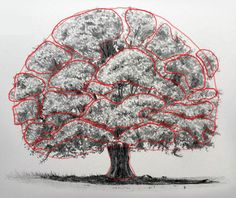 Flower Drawings Techniques Draw shapes of collections of leaves Plant Sketches, Tree Sketches, Art Drawings Sketches, Landscape Sketch, Landscape Drawings, Plant Drawing, Painting & Drawing, Tree Drawings Pencil, Flower Drawings