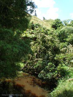 Undurchdringliches Grün mit einem von vielen Flussläufen.