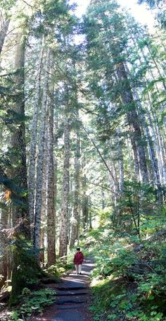 A woman walks along a trail surrounded by tall trees. Wonderland Trail, Mount Rainier National Park, Magic Forest, Park Service, American Civil War, Summer Travel, Washington State, West Coast, Paths