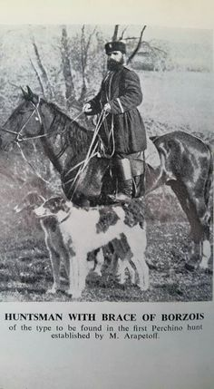 Huntsman with brace Borzoi dogs.