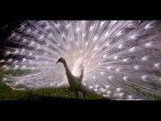 ▶ Tango - Stamatis Spanoudakis - YouTube