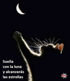 Las Kabalas de Kass Good Night, Believe, Feelings, Quotes, Cats, Movie Posters, Animals, Conan, Grinch