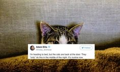 Can pets see what humans can't? Why cats & dogs may be more sensitive to the paranormal -- High Strangeness -- Sott.net