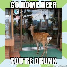 Go home deer, you're drunk.
