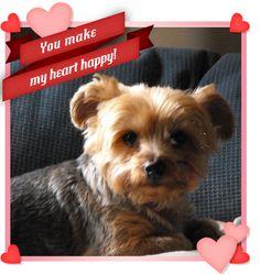 Little lover #Valentine #Dog looks like my Brodi!!