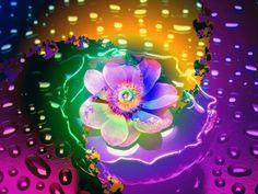 Lotus in the Rain - Brian Exton Art