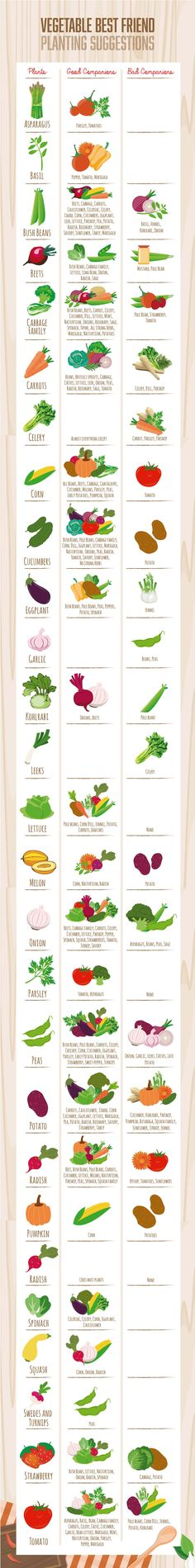 Learn more about companion planting for tomatoes, potatoes, cucumbers and more vegetables in this infographic chart.