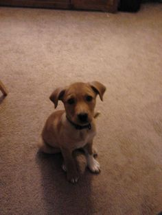 DOG MISSING - BIRMINGHAM, AL (Liberty Park area):    Little Max has been missing since Saturday in the Liberty Park area of Birmingham, AL.  Contact: 205-261-3493