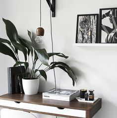5 Houseplants You Can't Kill - Cast Iron Plant and Rubber Plant Indoor Palms, Plants Indoor, Potted Plants, Indoor Garden, Cast Iron Plant, Baby Succulents, Chinese Money Plant, Cheese Plant, Interior Plants