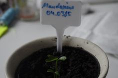 Mr. Greens Welt: Mandarine