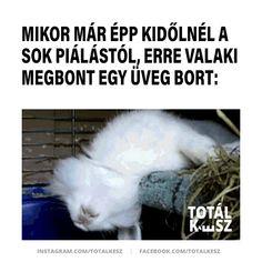 #viccek #vicceskép #viccesképek #viccesgif #viccesvideok #humoroskepek #poén #poénos #mém #mémek #magyarmeme #magyarmemek #hülyeség #hülyeségek #nevetés #nevess #alkohol #pia #húsvét Random, Funny, Liquor, Ha Ha, Hilarious
