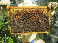 La théorie du tout: Dernière minute : Monsanto perd face aux apiculteu...