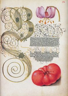 Calligraphy and botanical art