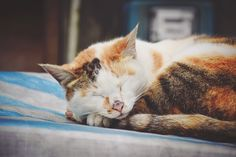 The sleeping cat. Sleep, Cats, Photos, Animals, Gatos, Pictures, Animais, Animales, Kitty Cats