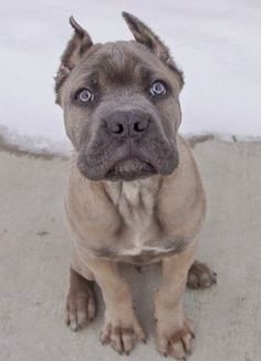 5 Most of protective dog breeds, did you know them?
