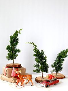 fresh mini christmas trees - Mini Live Christmas Trees