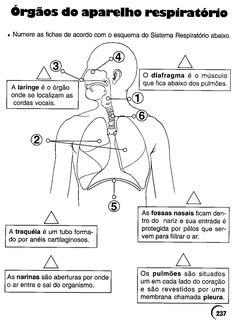sistema respiratório atividades - Pesquisa Google