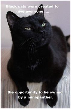 You have a need to lots of humor if you want to get through your day without losing your sanity.These black Cat Memes are helpful for that.Read This Top 24 Black Cat Memes I Love Cats, Crazy Cats, Cool Cats, Funny Cats, Funny Animals, Cute Animals, Animals Images, Beautiful Cats, Animals Beautiful