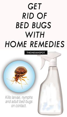 home remedies for bed bugs |  has talc as these suffocate the