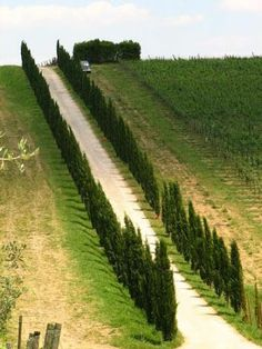 """ The roads of Chianti, Tuscany, Italy."" Situated between the provinces of Florence and Siena, the Chianti area has always been considered the heart of old Tuscany and is famous worldwide for its famous wines."
