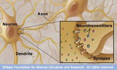 Neurotransmitters play a critical role in addition.  The basic unit of communication in the nervous system is the nerve cell (neuron). Each nerve cell consists of the cell body, a major branching fiber (axon) and numerous smaller branching fibers (dendrites). Nerve cells use chemicals called neurotransmitters to communicate with adjacent nerve cells across gaps at contact points called synapses. Neurotransmitters are received by receptors on other nerve cells.