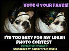 When they hosted a contest on Facebook #frenchbulldog #frenchie