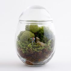 Picture That Male Terrarium now featured on Fab.