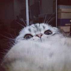 As displayed by his GPOY selfie.   26 Reasons Roku Should Be Your New Favorite Cat