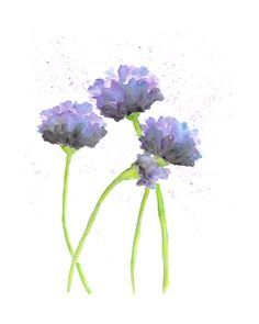 watercolor flowers | Watercolor flower painting, watercolor poppies, abstract poppies ...