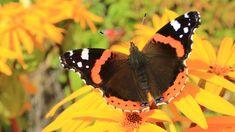 Kuvia neljästä vuodenajasta Butterflies, Flowers, Butterfly, Royal Icing Flowers, Flower, Florals, Floral, Blossoms