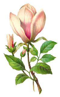 Free Flower Download Botanical Art Image