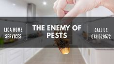 Are you facing problems in your then no need to worry. Just call --- 0731529572 Pest Control Services, Cleaning Service, Australia, House, Haus, Home, Homes