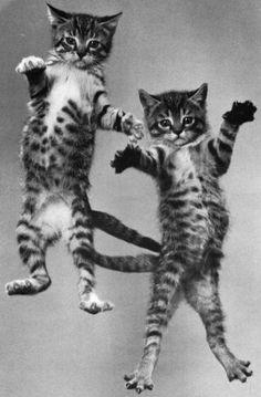 Cute jumping cats:-)