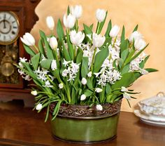 "Winter Whites, 33 bulbs in 10"" scrolled metal cachepot - White Flower Farm"