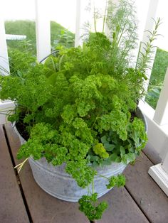 Growing Herbs In Containers | New Nostalgia