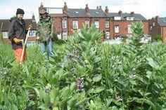 Urban Agriculture | part seven |Leeds