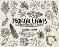 21 Doodle Tropical Leaves Vector Pack, Hand Drawn Doodle Clipart ,Hand Drawn Leaves, Sketch, Drawing, Vector, EPS, PDF, PNG, Ai file by CamDoodleArt on Etsy