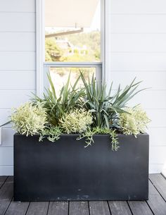 4 Fuss-Free Container Planting Ideas - New Ideas Evergreen Potted Plants, Evergreen Container, Full Sun Container Plants, Potted Plants Patio, Privacy Plants, Balcony Plants, Patio Planters, Landscaping Plants, Window Boxes