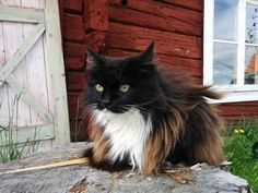 this cat is absolutely gorgeous